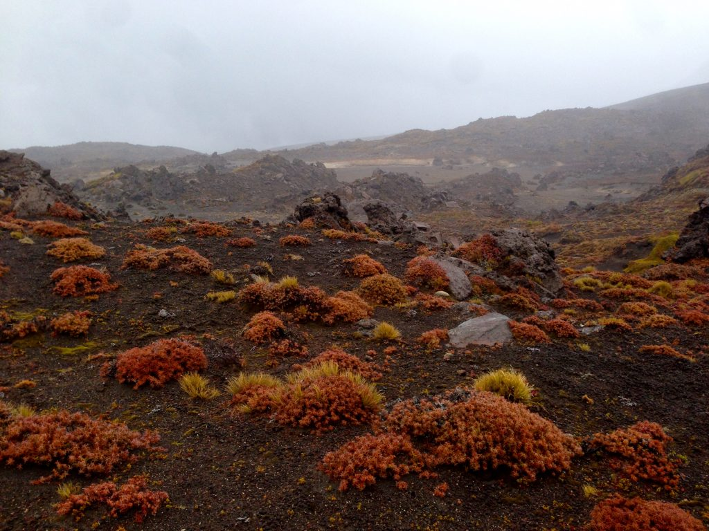 Red vegetation and shrubs against black Earth on the Tongariro Northern Circuit