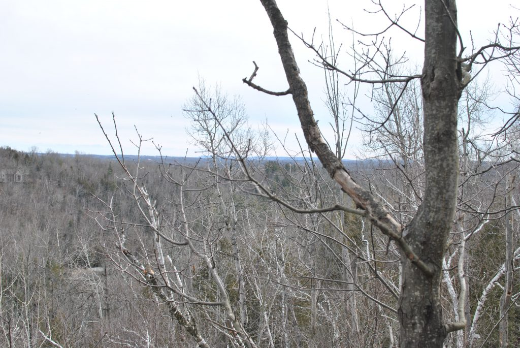 View through the trees in Silver Creek Conservation Area