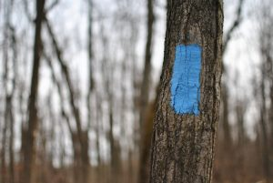Blue trail marker in Silver Creek Conservation Area