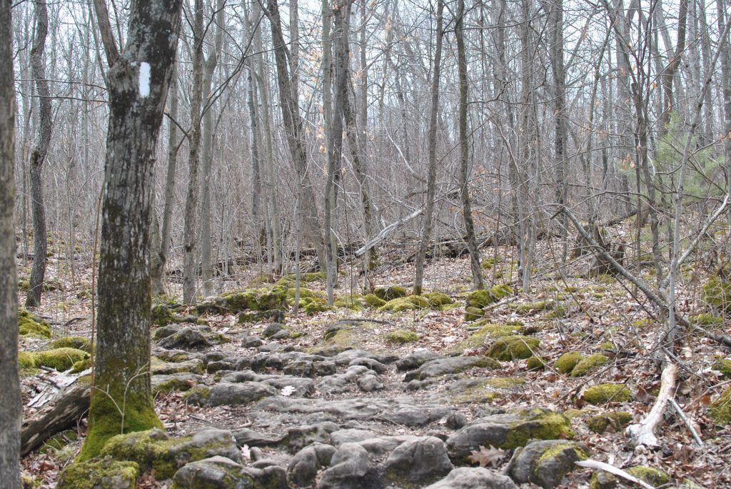 Silver Creek Conservation Area on the Bruce Trail, Ontario