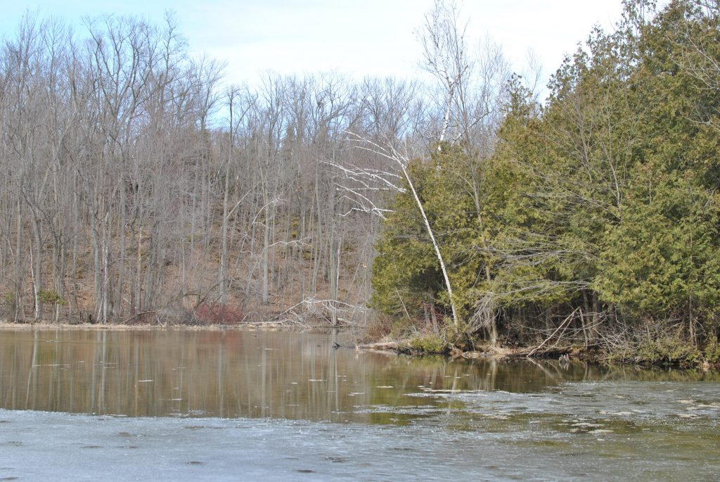 Silver Creek Conservation Area lake view